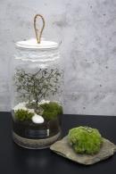 Galeria Growitbox
